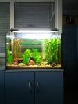 Пресноводное направление с искусственными растениями 170 л.,открытый аквариум