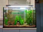 Пресноводное направление с искусственными растениями (170 литров,открытый аквариум)